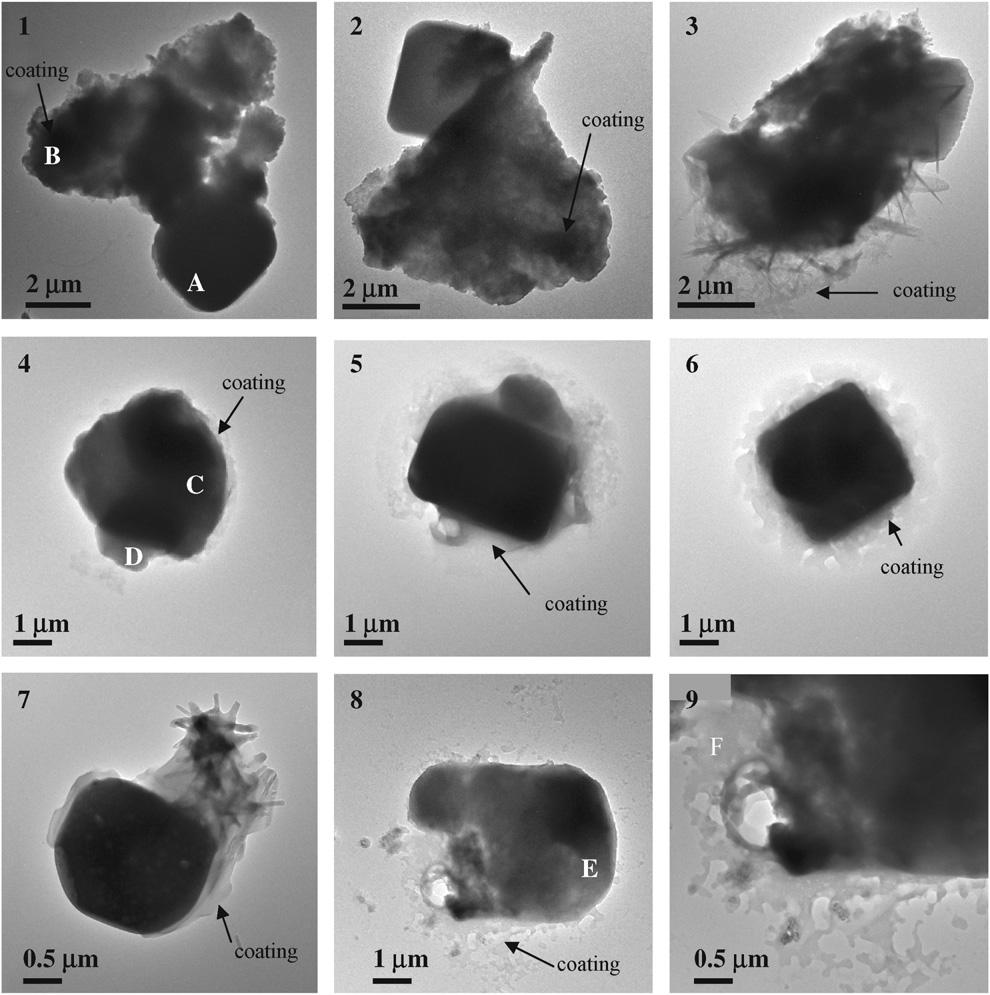 6228 T.A. Semeniuk et al. / Atmospheric Environment 41 (2007) 6225 6235 Fig. 1. Bright-field images of eight-coated particles from UAE, ACE-1, and SIO field campaigns.