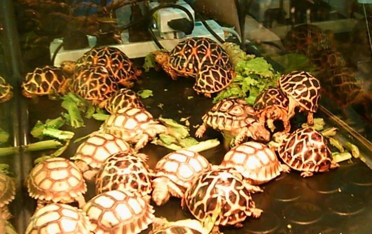 Strategi Turtle Trading Ala Richard Dennis